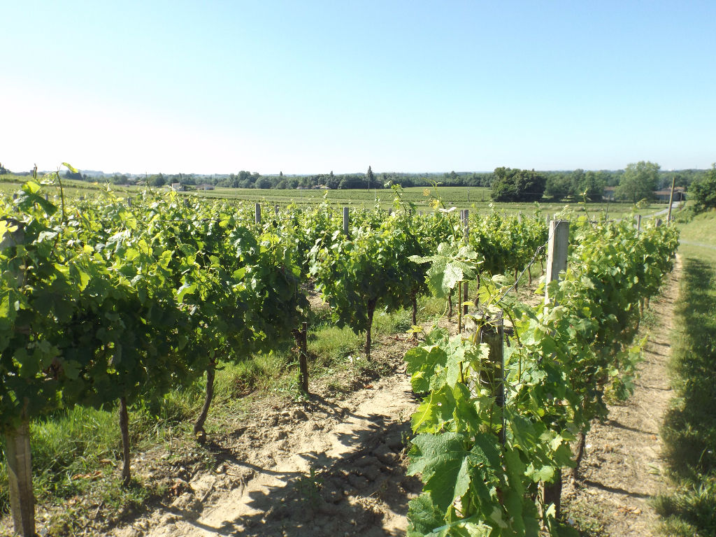 GIRONDE : Bel outil de production en AOC Bordeaux
